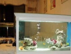 福州水族鱼管家