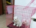 家庭生活馆宠物寄养