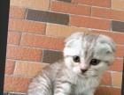 我的可爱猫猫,求好心人