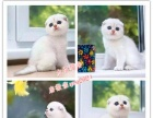 【水塔猫舍】自家养殖布偶英短,美短,包健康