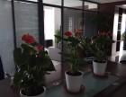天津大港绿植租赁花卉租赁公司海明花卉专业鲜花租摆销售