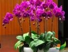 广州口碑好的花卉租赁公司哪家价格优惠