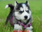 無錫寵物出售 無錫本地狗場 無錫哪里有寵物狗賣