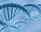 龙基因检测的费用高吗