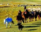 疆色进行到底 石家庄到新疆旅游,南疆+北疆全景双卧14日