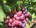 生态餐饮,苗木,水果采摘,垂钓