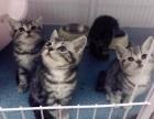 纯种短毛猫猫舍 上海爱宠网品牌猫舍 签协议的保证