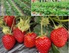 深圳日月潭农家乐,野炊,真人CS,摘草莓,海边骑单车,