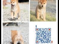 养殖场养殖 直销各种世界名犬包活签协议 欢迎来电