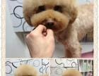 永旺旁边摩登宠物美容工作室(宠物店)