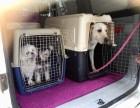 上海宠物护送宠物接送专车