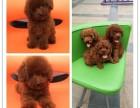 芜湖宠物狗出售 芜湖招宠物代理