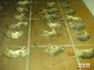 蓝田县灭四害公司,酒店灭蟑螂,餐厅灭老鼠