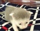 你喜欢小花猫吗?只是一般的价格合理。