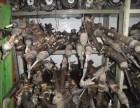 周山汽车旧件回收 各种大灯保险件 -鼎盛公司