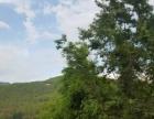 非中介永朗成熟果园可种植养殖 73260平米