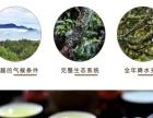 凤凰单丛茶 潮州单丛茶 高山桂花香茶 500g