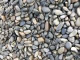 鹅卵石加工 园林绿化专用鹅卵石 鹅卵石批发