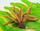 淄博市周村回收冬虫夏草(过期丶穿断头条丶虫蛀)精统混丨盒散装