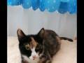 救助的猫咪免费寻领养啦