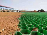 塑料平口植草格 塑料平口植草格批發 塑料平口植草格供應