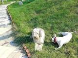北京宠物行为心理研究驯养中心可上门训狗一对一教学