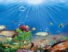 上海观赏鱼护理 观赏鱼技术饲养