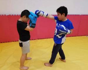 中小学生幼儿散打格斗拳击跆拳道培训班全能搏击培训教学