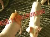 养猪轧花网 安平县航超轧花网厂