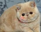 深圳人都到哪里去买加菲猫 深圳较便宜加菲猫价格