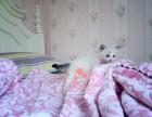 兰州哪里有卖布偶猫 兰州纯种布偶猫一只多少钱