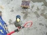 常年出售各种鸟笼子