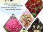 御鑫园精品鲜花、绿植火热预定——市内免费配送