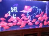 上海卖鱼缸的地方,哪里鱼鱼缸卖,鱼缸批发市场
