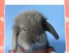常年批发零售各种宠物兔用品