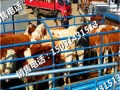 重庆河北肉牛犊价格