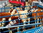 重庆~河北肉牛犊价格多买优惠
