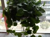 南昌花卉绿植批发市场 南昌红谷滩区花卉公司