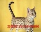 各种宠物猫欢迎选择