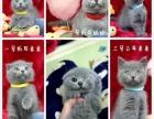 提莫私宠 — 用心做好猫!