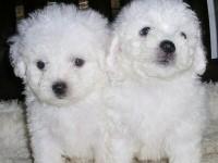 武汉宠物狗领养中心 只需身份证实名领养