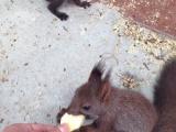 养殖场直销各类松鼠