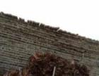 大量收购建筑长短方木