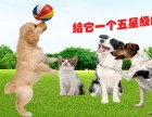 南京宠物寄养好去处,南京赛能宠物乐园,占地40亩独院