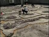 南宁市楼顶漏水补漏维修公司