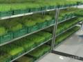 潍坊益康园富氧水发生器富养芽苗菜种植必备设备