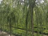 大风刮过以后的苗圃