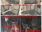 热镀锌材质狗笼,采用4mm热镀锌网片