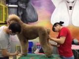 滨州宠物美容,滨州宠物美容师学校,滨州宠物美容培训学