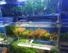 海鑫水族上门清洗鱼缸维护造景